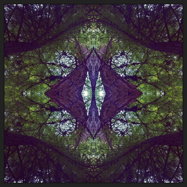 Redwoods #mirrorgram