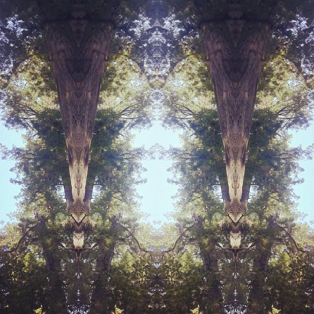 Fractal Forrest #mirrorgram