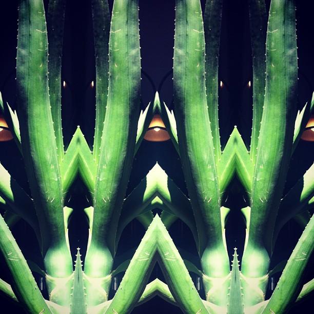 plants #mirrorgram